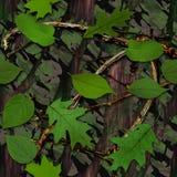 Camuflaje natural Fotografía de archivo libre de regalías