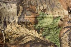 Camuflar Foto de Stock