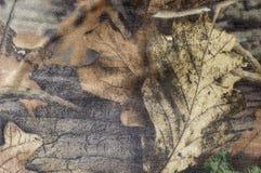 Camuflar Foto de Stock Royalty Free