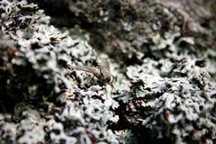 camuflar Fotografia de Stock Royalty Free
