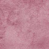 Camurça cor-de-rosa Fotos de Stock
