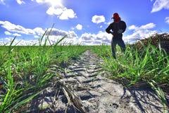 Canção cukrowa plantacja, stan Alagoas Brazylia fotografia royalty free