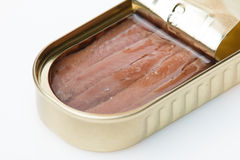 Can of anchovies Stock Images