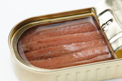 Can of anchovies Royalty Free Stock Photo