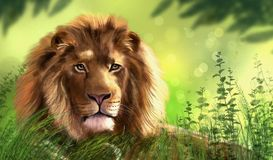 Illustration of lion. Digital painting. It can be used as logo, web, product display, posters, business card, apps, as wallpapers, for presentations, etc Stock Photo