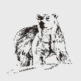 Polar bear. Vector sketch. Hand draw. It can be used as logo, web, product display, posters, business card, apps, as wallpapers, for presentations, etc Stock Photography