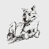 Vector sketch of wolf. It can be used as logo, web, product display, posters, business card, apps, as wallpapers, for presentations, etc Royalty Free Stock Photos