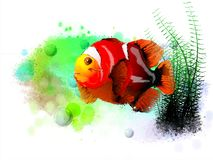Red tropical fish on the background of spray paint. royalty free stock photo