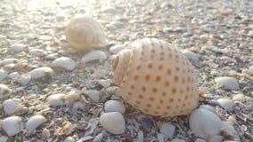 Can Gio Beach royalty free stock photo