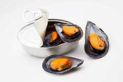 Can of mussels Stock Photography