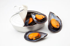 Can of mussels Stock Image