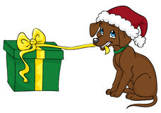 Can we open it now?. Cute brown dog in a Christmas hat is pulling the ribbon and begging to open the present Stock Image