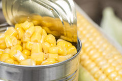 Can with Sweetcorn Royalty Free Stock Photos