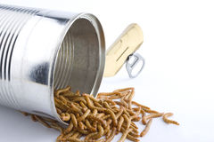 Can of Worms Royalty Free Stock Images