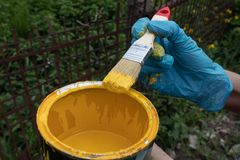 A can of yellow paint and a hand holding a brush dipped in it stock photo