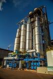 Cana-de-açúcar da fábrica Imagem de Stock