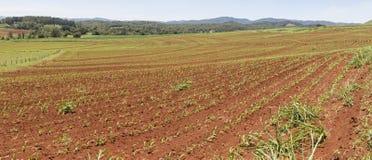 Cana-de-açúcar de planeamento contorno Planalto de Atherton, Queensland norte distante fotos de stock