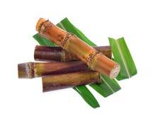 Cana-de-açúcar isolado no fundo branco Imagens de Stock