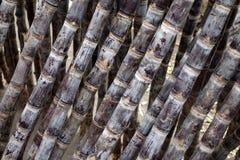Cana-de-açúcar Foto de Stock