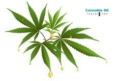 Canaabis o la marijuana deja el extracto de la hoja del c??amo ilustración del vector