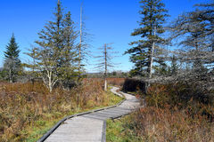 Canaan Boardwalk Hike Royalty Free Stock Photography