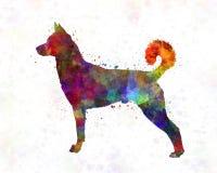Canaan Dog en acuarela Imágenes de archivo libres de regalías