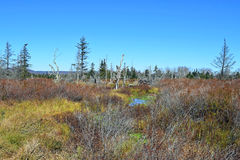 Canaan Valley Bog Stock Afbeelding