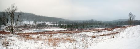Canaan Valley field and beaver pond in West Virginia Stock Images