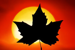 Canada. The Flag of Canada in red sunlight Stock Photography