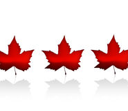 Canada. The Flag of Canada with maple leaves Stock Photos