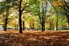 Canada Autumn Color Stock Photos