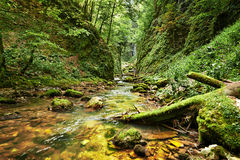 Canada banff canyon naturalnego river park Zdjęcia Stock