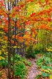 Canada barwy jesieni Zdjęcia Stock