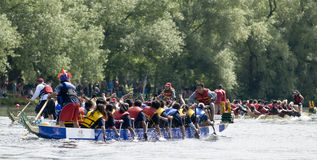 Canada Computers Dragon Boat racing Royalty Free Stock Photo