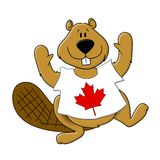 Canada Day Beaver Wearing T-Shirt Stock Photography