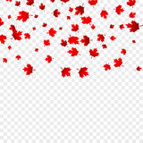 Canada Day maple leaves background. Falling red leaves for Canada Day 1st July.  Royalty Free Stock Images