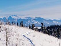 Canada du Yukon de paysage d'hiver de chemin de raquette de Taiga image libre de droits