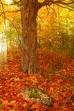 Canada fall Stock Photography