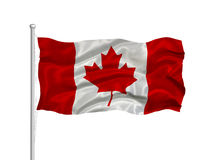 Canada Flag 2. Illustration of waving Canadian flag on white Stock Images