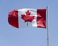 Canada Flag. Blowing in the wind Royalty Free Stock Image