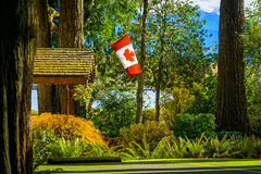 Canada flag in forest, BC, British Columbia, Canada stock photo