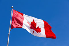 Canada flag maple leaf flies light wind Royalty Free Stock Image