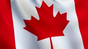 Canada flag waving in the wind - animated stock video footage