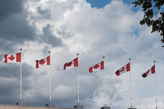 Canada flags Royalty Free Stock Image
