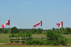 Canada flags in the field Royalty Free Stock Image
