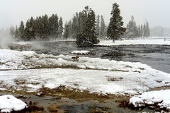 Canada Geese Geothermal pool Yellowstone Wyoming Royalty Free Stock Image