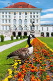 Canada goose in front of Nymphenburg Castle Royalty Free Stock Image