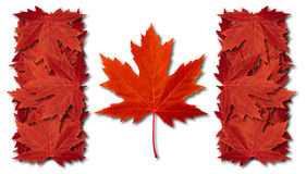 Canada Leaf Flag. Made with three dimensional red maple leaves as an autumn symbol as a canadian pride seasonal themed concept as an icon of the fall weather on Royalty Free Stock Photos