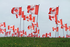 Canada Maple Leaf Flag Royalty Free Stock Image