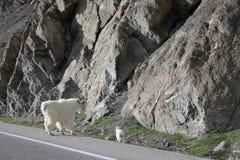 canada park narodowy Zdjęcia Royalty Free